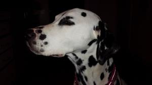 Världens finaste hund <3