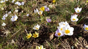 Våren är här! :)