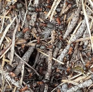 7-åringen har myror i brallan!